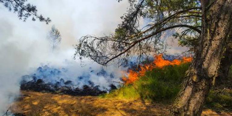 Brand Hoge Veluwe verwoest 4 hectare natuur