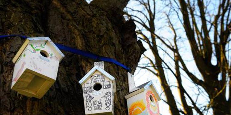 Steeds minder stadsvogels in Nederland