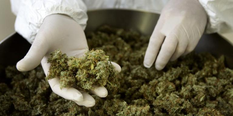 Politie Breda treft 45 kilo henneptoppen aan
