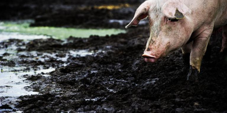 Meer steun melk- en varkenssector in aantocht