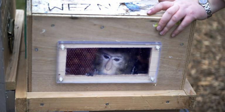 Verstekeling-apen naar Stichting AAP