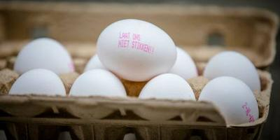 'Gevolgen fipronil-crisis nog niet voorbij'