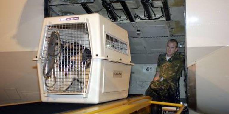 Hond opent vrachtluik van passagierstoestel