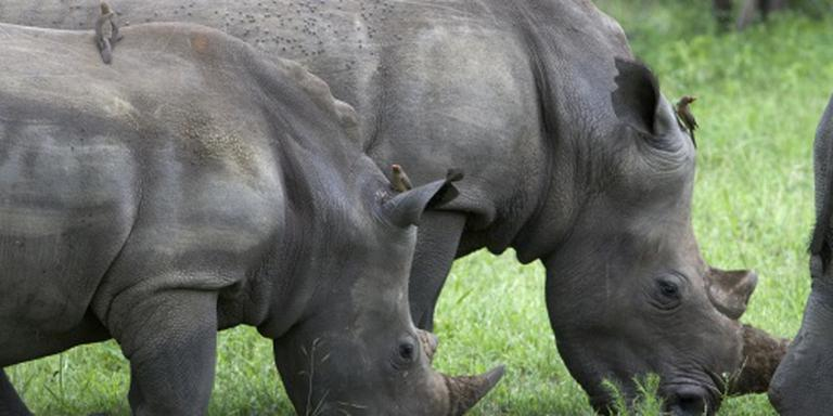20 jaar voor smokkelen neushoornhoorns