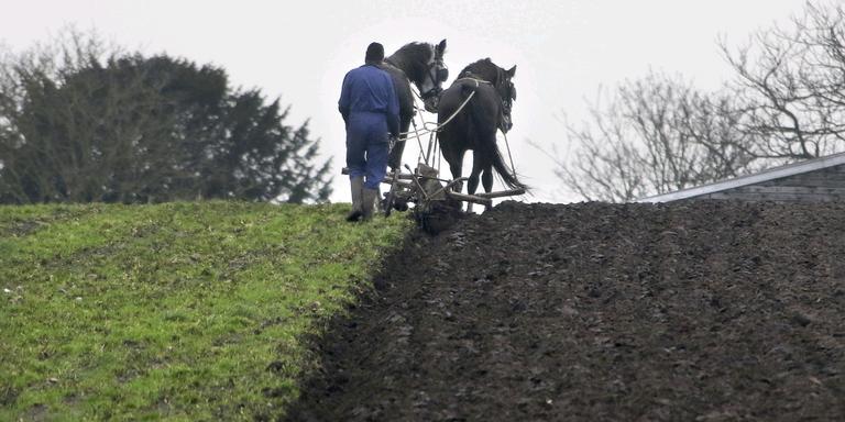 Oud-boer Obe Mous ploegt voor het eerst op de ouderwetse manier een lap grond om. FOTO SIMON BLEEKER
