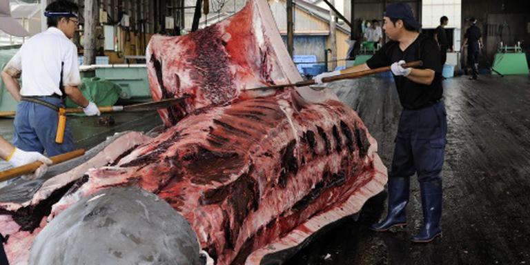 Japanse vissers doden tientallen walvissen