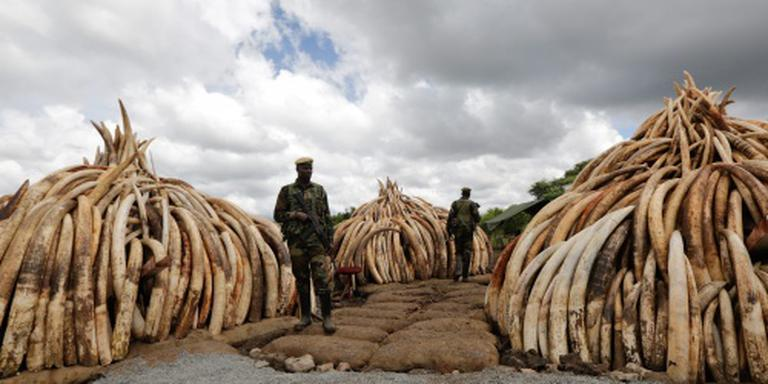 Kenia verbrandt 105 ton ivoor