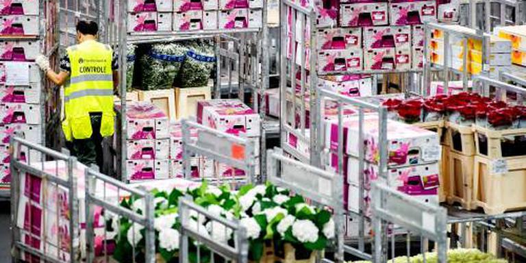 Export bloemen en planten gestagneerd door kou