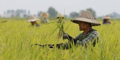'Keurmerk duurzaamheid behoeft verbetering'