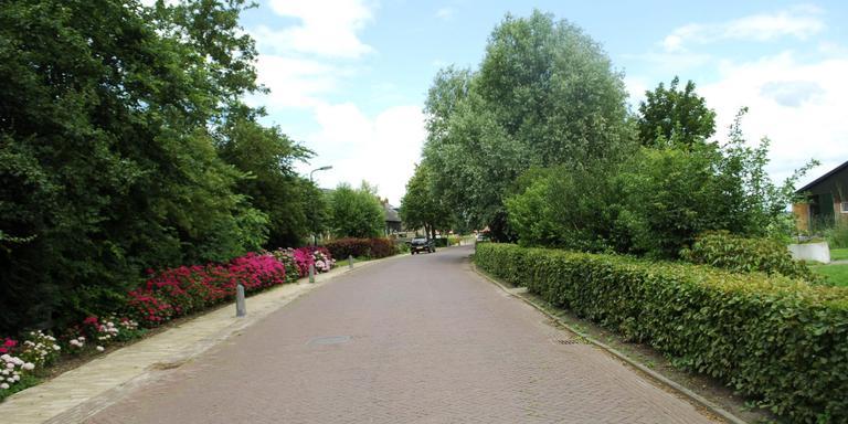 Kleurrijke hortensia's in Gaastmeer geven een meerwaarde aan het straatbeeld FOTO HIEKE JOOSTEMA