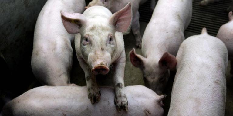 Boeren boos over hogere keurkosten NVWA