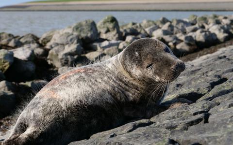 Van de zon genietende zeehond zorgt voor vertederende beelden