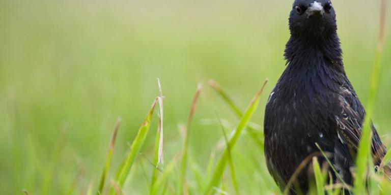 In 2015 ruim 17 miljoen trekvogels geteld