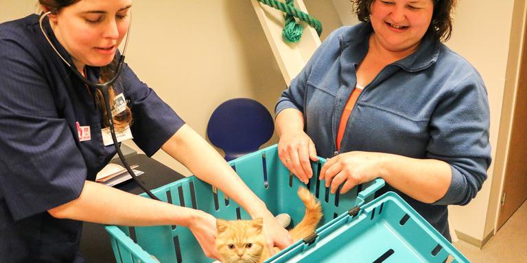 Dierenarts Lilian van Dijk uit Leeuwarden liet zich omscholen tot Cat Advocate. FOTO ARODI BUITENWERF