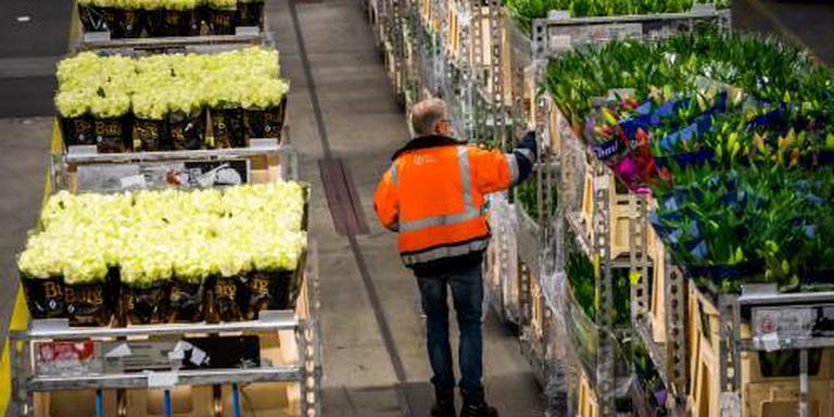 Bloemen- en plantenexport dichtbij record