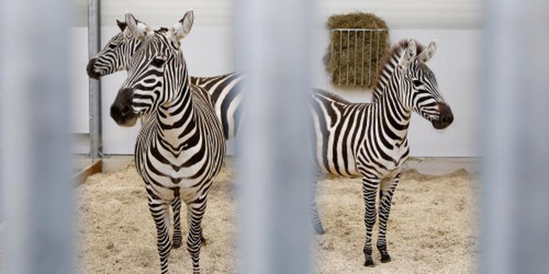 9,5 miljoen bezoekers voor dierentuinen