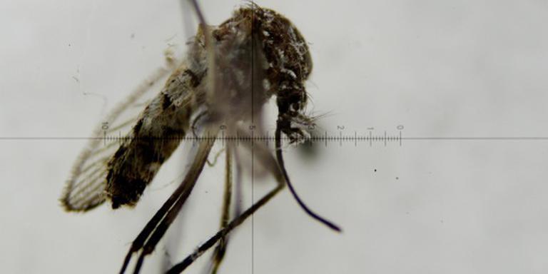 Amerikanen bestrijden zika vanuit de lucht