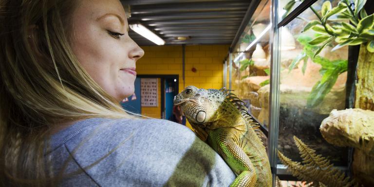 Stephanie Posthuma neemt een groen leguaan, een van de bewoners van de nieuwe terraria van het Nordwin College, op haar schouder. FOTO MARCEL VAN KAMMEN.