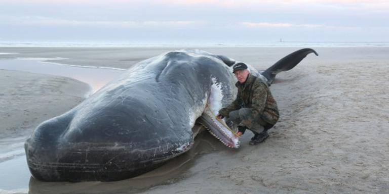 Dode potvissen aangespoeld op Duits eiland