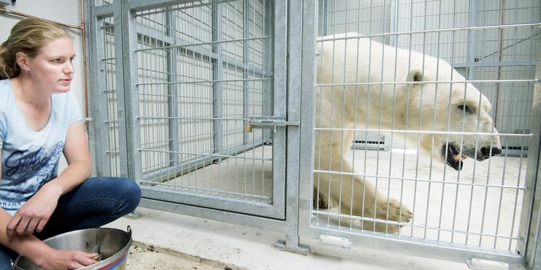 IJsbeer Felix met verzorgster Dorine van Appeldoorn. FOTO MARCEL VAN KAMMEN