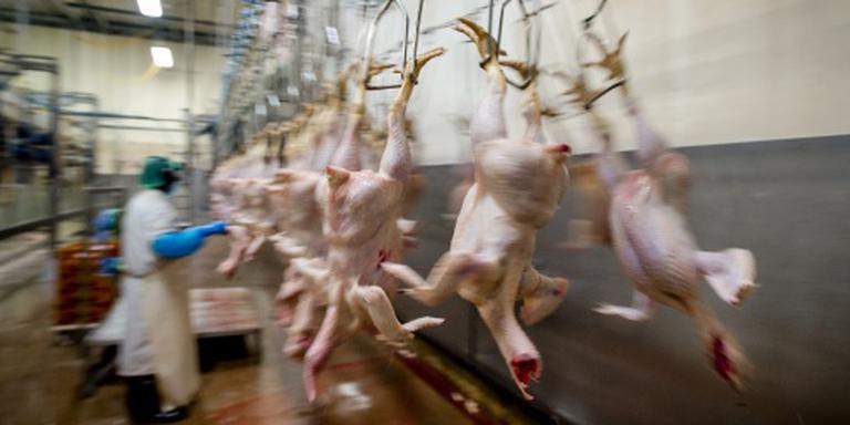 FNV dreigt met acties in pluimveesector
