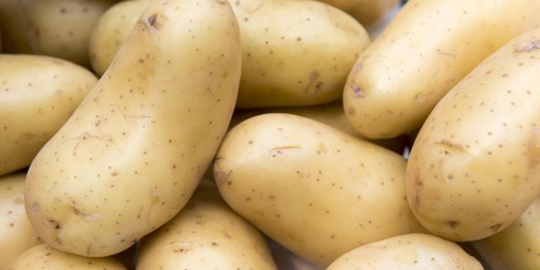 'Aardappel resistent tegen gevreesde ziekte'