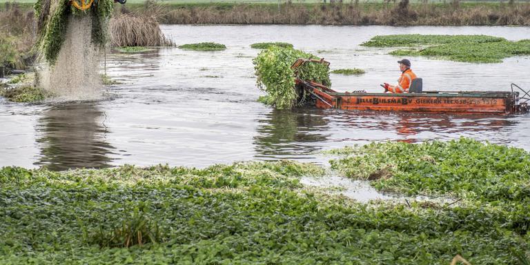 Watersportsector bestrijdt waterplant