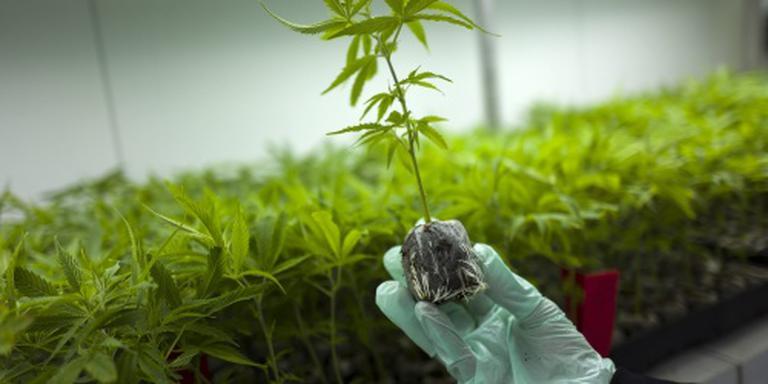 VNG wil experimenten gereguleerde wietteelt