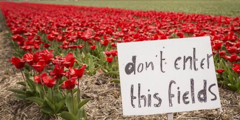 Brexit drukt exportgroei bloemen en planten