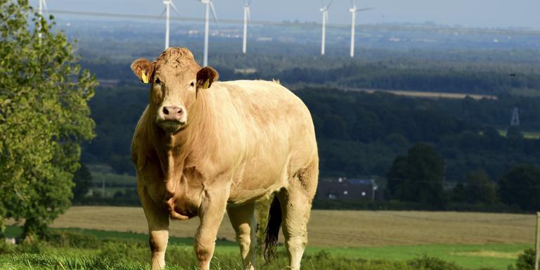 De boodschap van de Ieren is duidelijk: het beste rundvlees komt bij ons vandaan. foto ALFIE SHAW