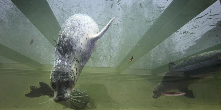 Ruim twintig liefhebbers voor failliet Aqua Zoo
