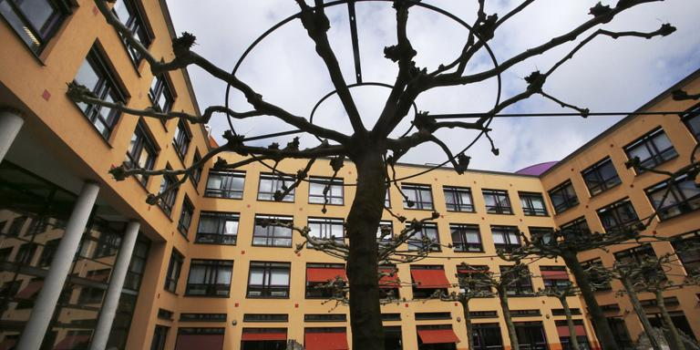 Bomenridders: verlies in strijd om platanen