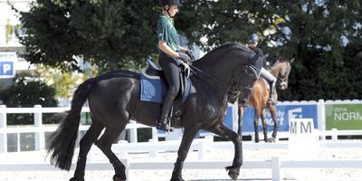 'Friese paard wordt gediscrimineerd'
