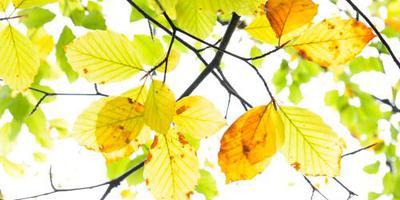 Bedreigde eik in berm A58 'boom van het jaar'