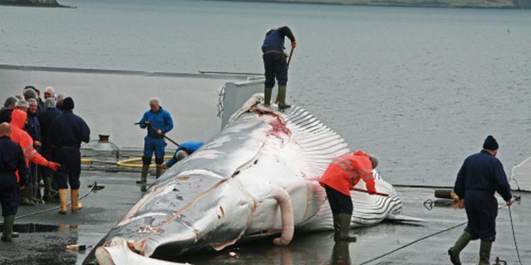 IJsland vangt dit jaar geen walvissen