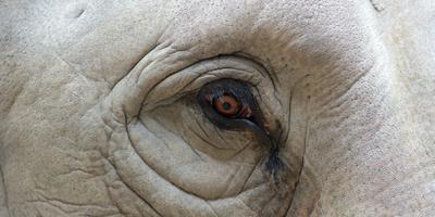 Indiase olifant vertrapt Brit