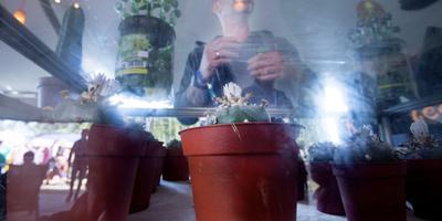 Psy-Fi: Leeuwarden grijpt in na reclame coffeeshop