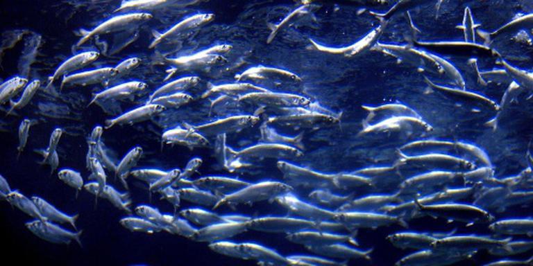 Europees plan voor Noordzeevissers