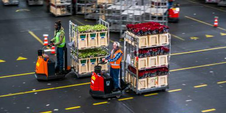 Omzetwaarde export bloemen planten stabiel