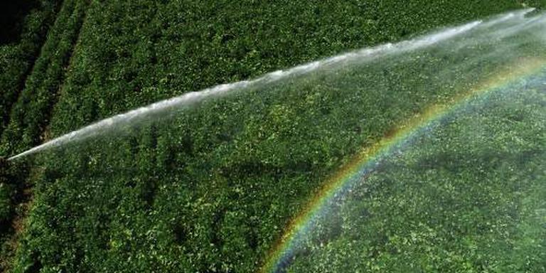 LTO: oogst minder bij boeren met sproeiverbod