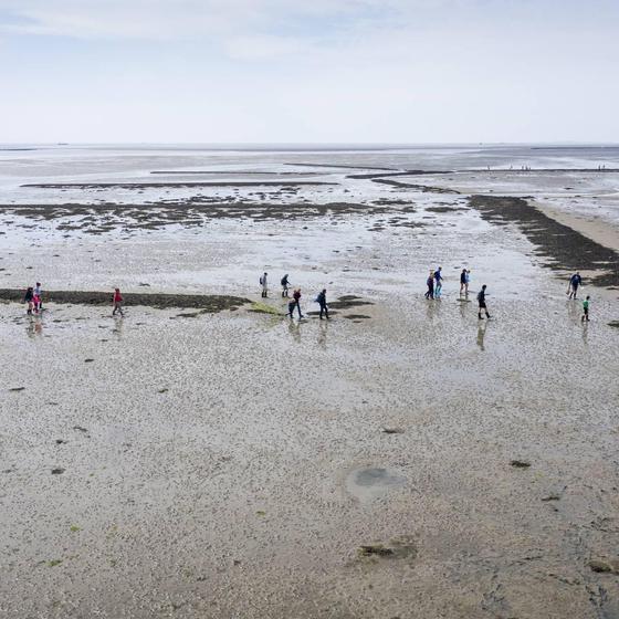 Waddenvereniging: IPCC-rapport schetst nog slechter beeld Wadden