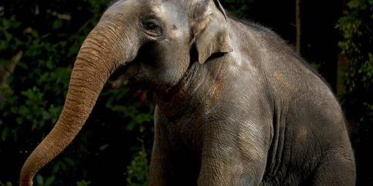 Botswana overweegt olifantenjacht toe te staan
