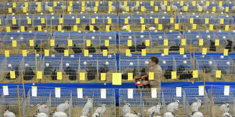 Inenting verplicht voor konijnen dierenshows