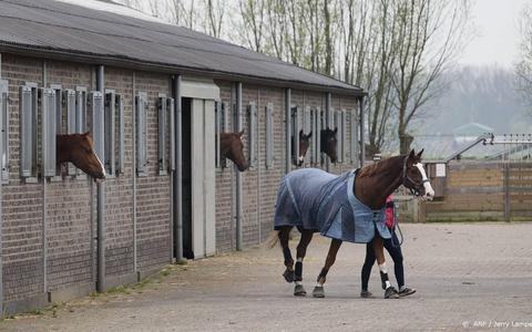 Paarden bij een manage.