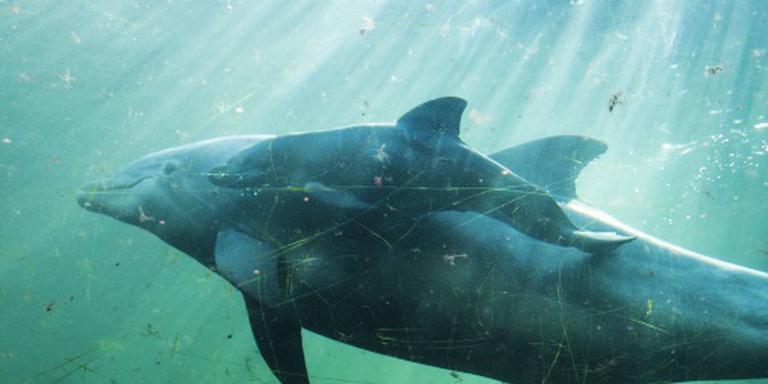 Minder dolfijnen in Dolfinarium