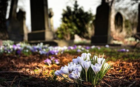 Gestolen beelden begraafplaats Oosterwolde zijn weer terecht