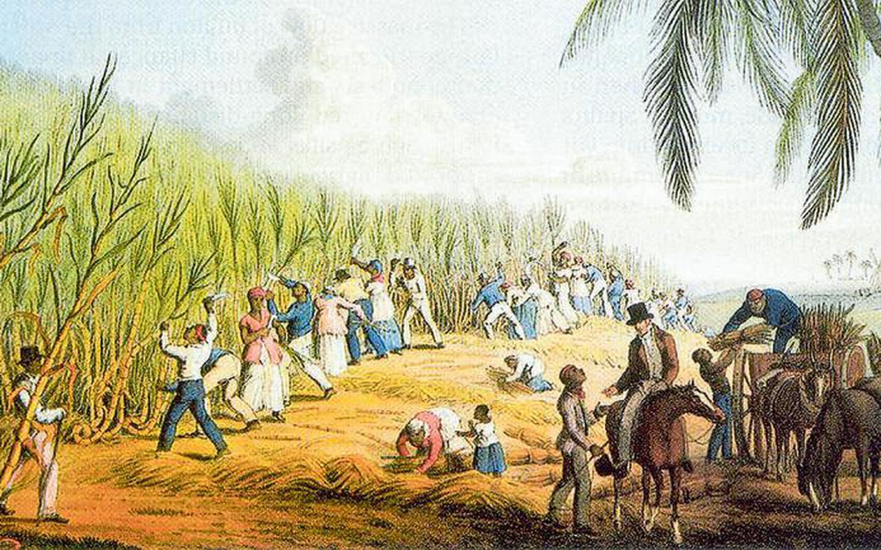 Historische schoolplaat van een koloniale suikerrietplantage. Vrijwel alle Nederlandse suiker was tot in de negentiende eeuw afkomstig uit de koloniën.