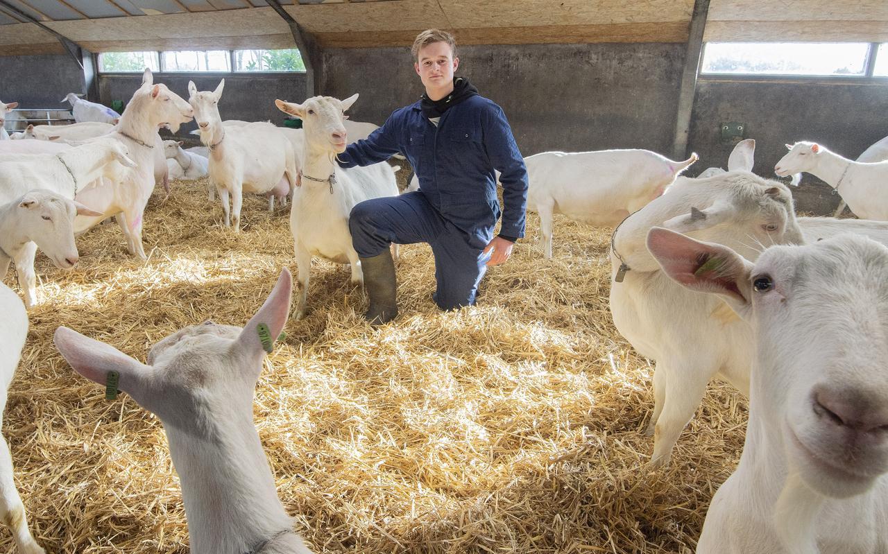 Hendrik Koonstra (16) bij de geiten die hij kort voordat hij een avondklokboete kreeg nog gemolken had.