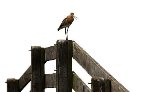 Leeuwarden: provinciale kaart toont onterecht vogelweiland waarvoor miljoenen compensatie is betaald