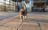 Leeuwarder stationskat Bella vermist: 'Ik kreeg al vrij snel het gevoel dat er iets niet klopte'